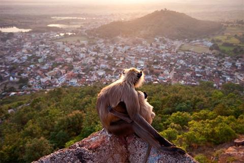 Hai mẹ con khỉ langur ngồi trên núi để nhìn thành phố Ramtek, bang Maharashtra, Ấn Độ. Chúng chọn mỏm đá cao nhất để có thể quan sát mọi thứ một cách dễ dàng. Ảnh: Olivier Puccia (Pháp)