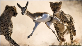 Những bức ảnh 'để đời' về thế giới động vật