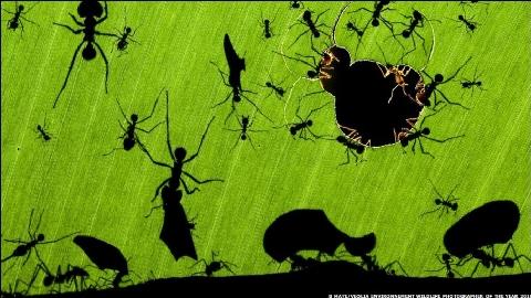 Bức ảnh chụp kiến ăn lá của Bence Mate tại Costa Rica đã đoạt giải chính giải thưởng Nhiếp ảnh gia về Động vật hoang dã của năm. Anh nói: