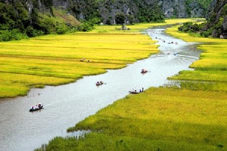 Đi thuyền trên sông Ngô Đồng